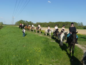 Balade campagne Touraine Cheval