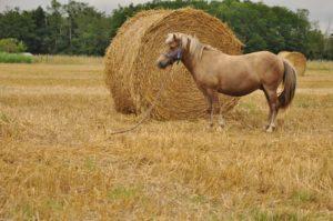 ticajou touraine cheval