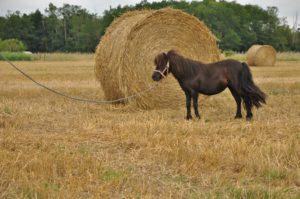 vanera touraine cheval