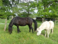 obelix et raven touraine cheval