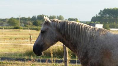 Appolon touraine cheval