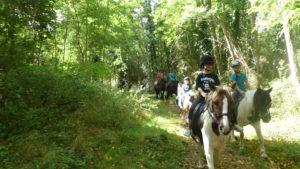 balade en foret touraine cheval