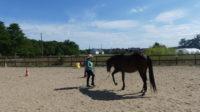 travail a pied ethologie touraine cheval