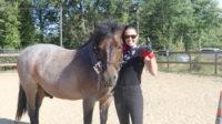 cheval rock touraine cheval